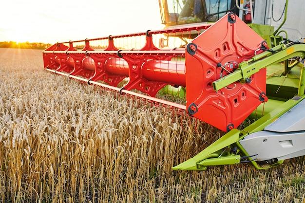 La mietitrebbia raccoglie grano maturo.
