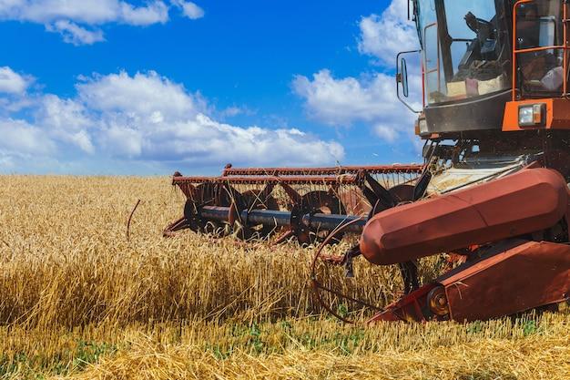 La mietitrebbia raccoglie il grano maturo nel campo di grano. lavori agricoli in estate. dettaglio del primo piano della mietitrebbia.