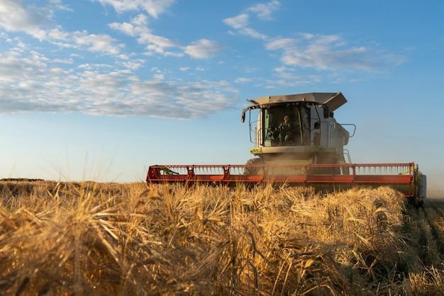 La mietitrebbia raccoglie il grano maturo.