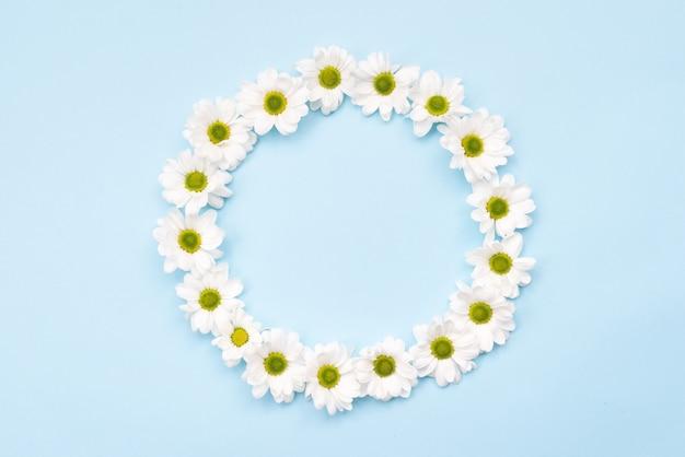 La natura del fondo, margherite bianche ha sistemato in un cerchio su fondo bianco con lo spazio della copia