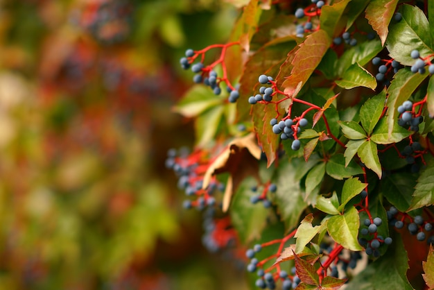 La natura in autunno a meteora è un'attrazione turistica in più per la sua bellezza e i suoi colori affascinanti