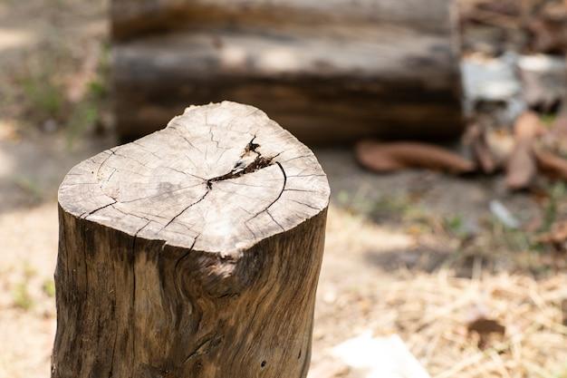La natura tagliata dell'albero viene distrutta