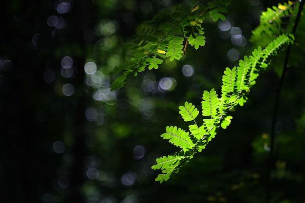 La natura verde tropicale lascia il fondo.