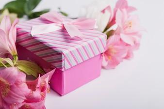 La ninfea rosa fiorisce con il contenitore di regalo su fondo bianco