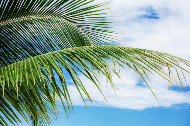 La noce di cocco va al cielo con bello.