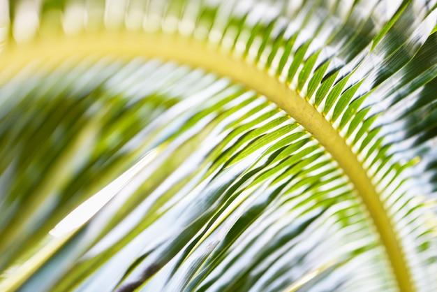 La noce di cocco va / pianta tropicale del fondo di foglia di palma verde fresca