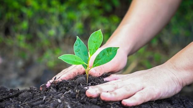 La nuova vita della piantina di una giovane pianta cresce nel suolo nero. giardinaggio e concetto di risparmio ambientale. persone che si prendono cura della piantagione precoce.