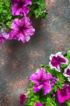 La pagina dai fiori delle petunie, modello floreale su un fondo scuro con il piano dello spazio della copia pone la vista superiore da sopra