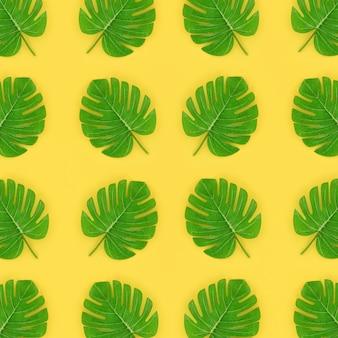 La palma tropicale monstera lascia il modello si trova su una carta colorata pastello.