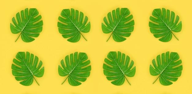 La palma tropicale monstera lascia le bugie su una carta colorata pastello. concetto di natura estate. composizione piatta laica vista dall'alto