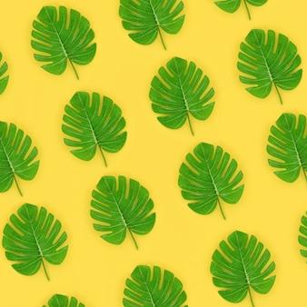 La palma tropicale monstera lascia le bugie su una carta colorata pastello