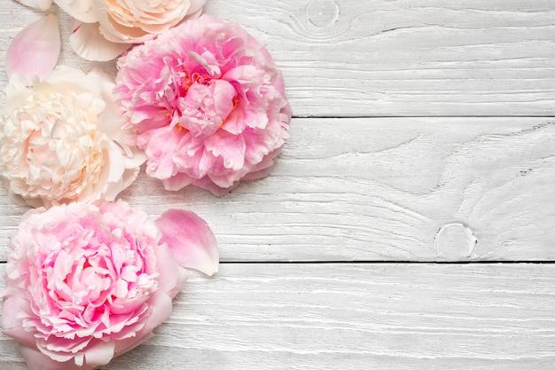 La peonia rosa e cremosa fiorisce su fondo di legno bianco. disteso. vista dall'alto con spazio di copia