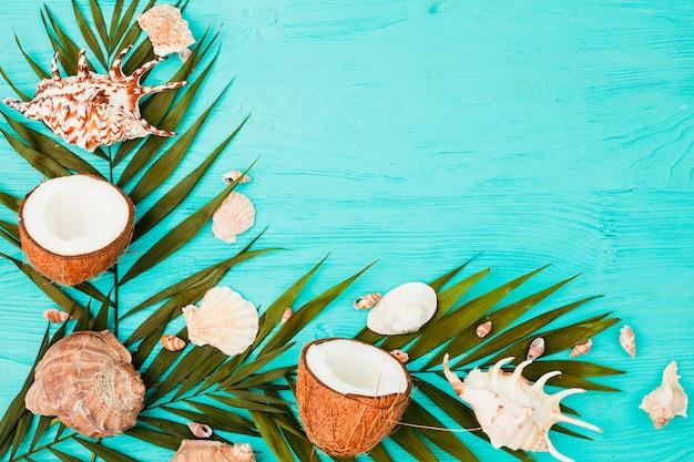 La pianta lascia vicino a noci di cocco e conchiglie a bordo