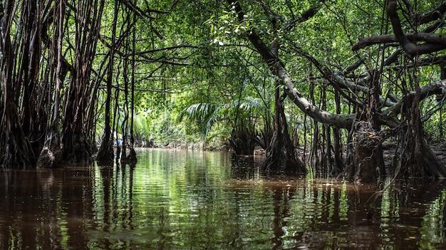 La piccola amazzonia nel fango-nga in sang nae canal tailandia