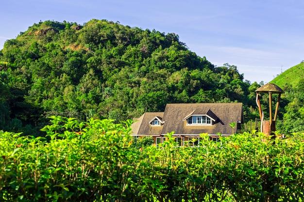 La piccola casa si nasconde sotto l'ombra della collina nella foresta.