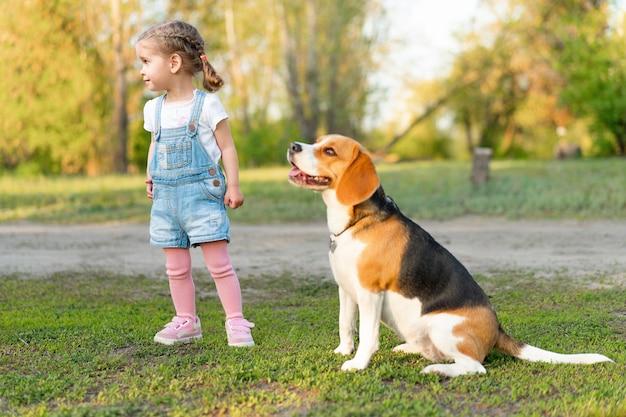 La piccola ragazza caucasica cammina con il suo cane di estate nel parco sulla natura. beagle di razza