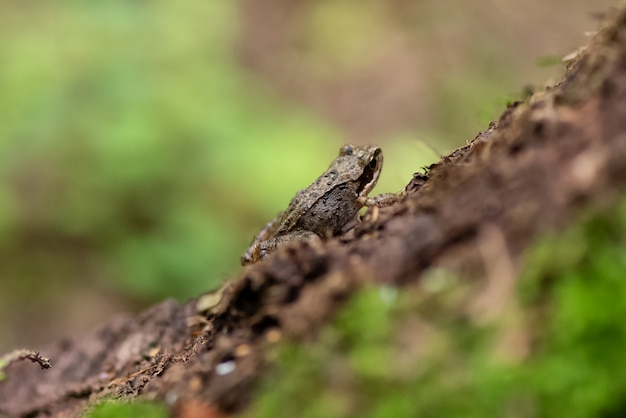 La piccola rana si siede sul tronco d'albero