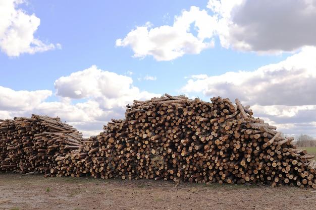La pila di pino tagliato collega una foresta. tronchi di legno, disboscamento di legname, distruzione industriale, foreste stanno scomparendo, disboscamento illegale. messa a fuoco selettiva.