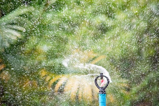 La plastica dell'irrigatore è albero innaffiato foglie vaghe del fondo.