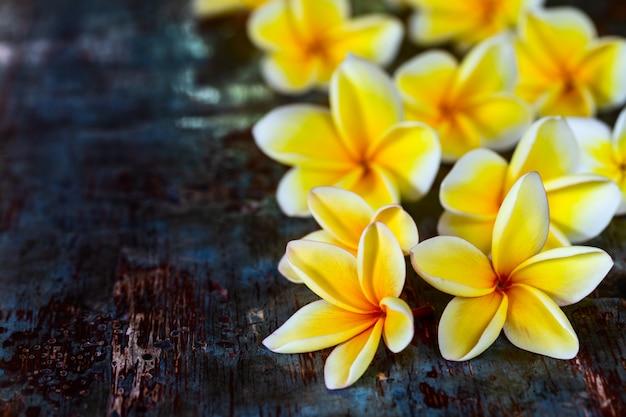 La plumeria gialla del frangipane fiorisce sulla tavola rustica di legno blu scuro.