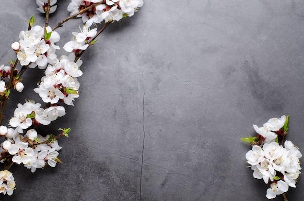 La primavera fiorisce con le albicocche sboccianti dei rami su fondo grigio