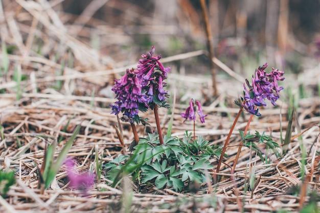 La primavera sboccia fiori selvatici