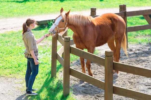 La ragazza alimenta un cavallo nel recinto chiuso