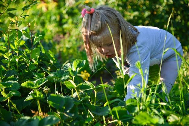 La ragazza raccoglie le bacche nel giardino del villaggio