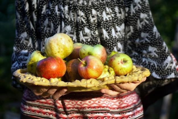 La ragazza raccoglie le mele da un albero in un giardino di autunno al tramonto
