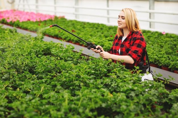 La ragazza spruzza le piante. ragazza che lavora in serre. piante fertilizzanti