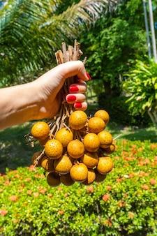 La ragazza sta per mangiare il longan in un giardino tropicale. vitamine, frutta, cibi sani