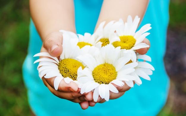 La ragazza tiene in mano fiori di camomilla. messa a fuoco selettiva