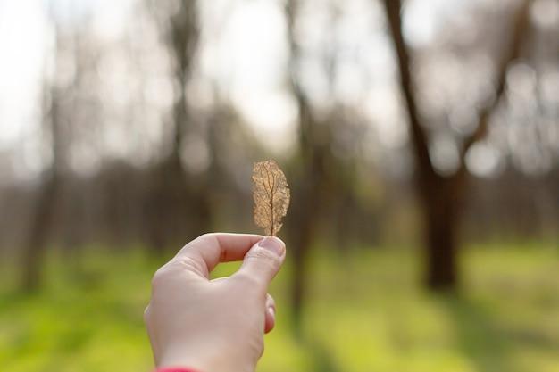 La ragazza tiene in mano un insolito foglio scheletrato secco in mano su uno sfondo di parco