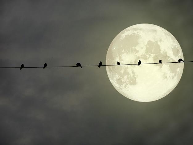 La siluetta degli uccelli appende sulla linea elettrica di potere e sulla luna piena eccellente