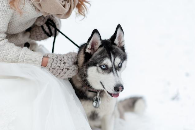 La sposa sveglia con la corona sta giocando con il husky siberiano su fondo di neve bianca. matrimonio invernale.