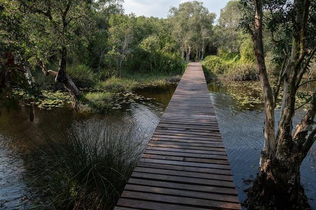 La strada attraverso la foresta di cajuput nel parco botanico di rayong, thailandia