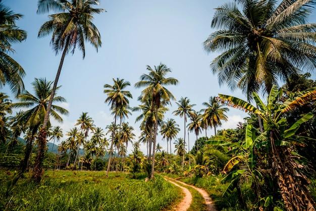 La strada nella giungla. palme e cielo.