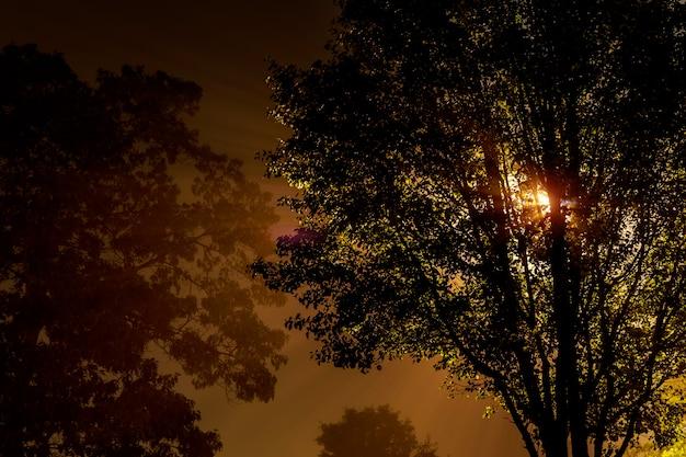 La strada vicino all'albero di notte è avvolta dalla nebbia, illuminata da una lampada