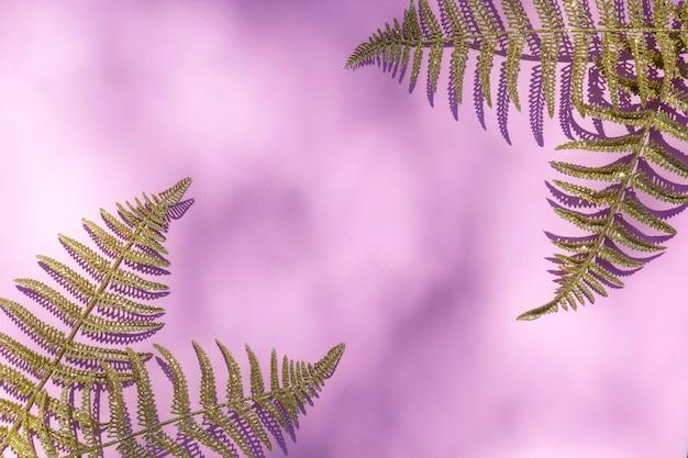 La struttura astratta con la felce di oro copre di foglie, palma su luce solare