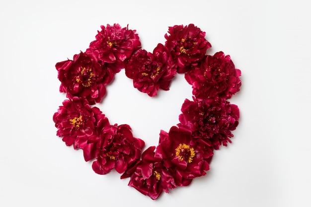 La struttura del cuore fatta di peonia rossa fiorisce con lo spazio della copia per testo su bianco