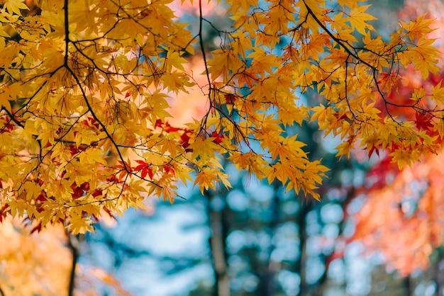 La struttura del fondo del colore giallo lascia la priorità bassa del foglio di autunno