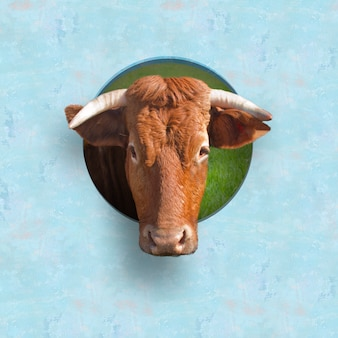 La testa di toro