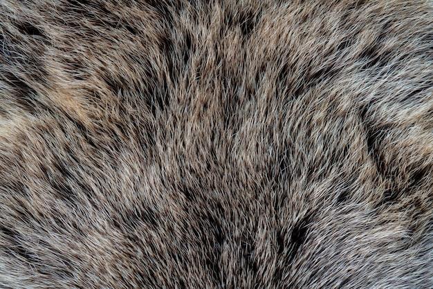 La trama della pelliccia di un orso. pelle di un animale selvatico.