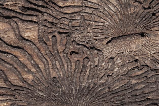 La trama della superficie interna della corteccia di pino danneggiata da insetti nocivi