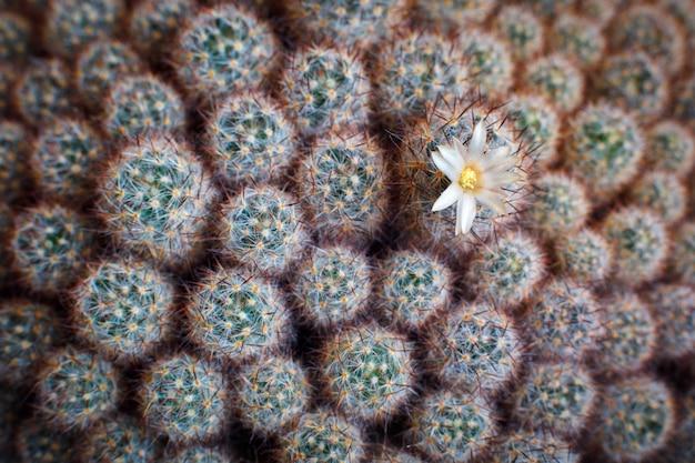 La trama naturale di molti piccoli cactus verdi con un fiore. vista dall'alto