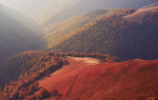 La vegetazione degli altipiani in estate modesta e colori insolitamente belli fiorisce in autunno, prima del freddo. mirtilli rosso vivo, verde bosco di conifere, arancio buk- montagne sinie- fascino fantastico.