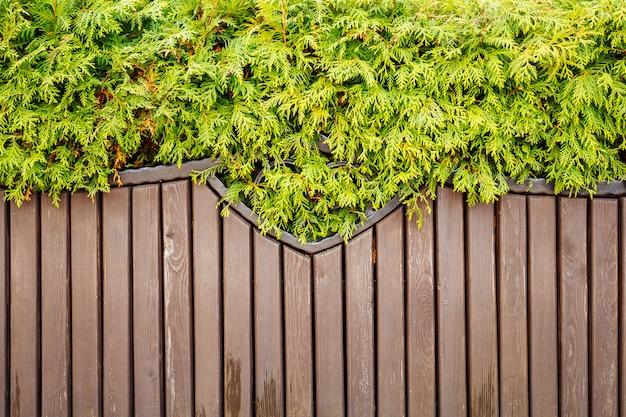 La vegetazione pende su una panca di legno