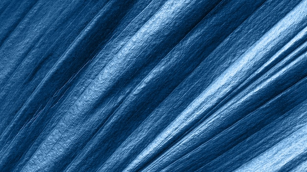 La vista alta vicina di estremo della foglia tropicale ha tonificato nel colore blu 2020 di modo.