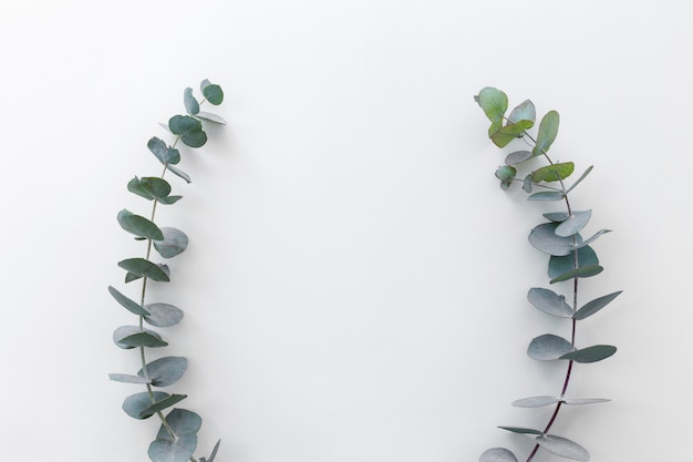 La vista dell'angolo alto delle foglie verdi ha sistemato sul contesto bianco