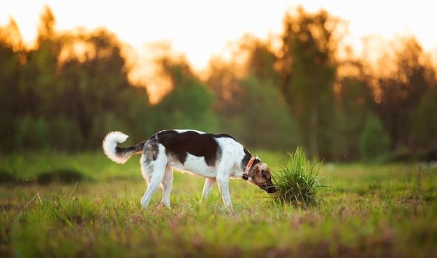 La vista laterale ad un cane ibrido annusa il terreno
